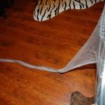 Dip Net Shrimping