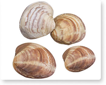 clams_index